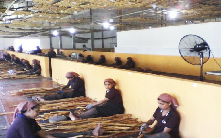 Reinvigorating Sri Lanka's Ceylon cinnamon exports/gallery