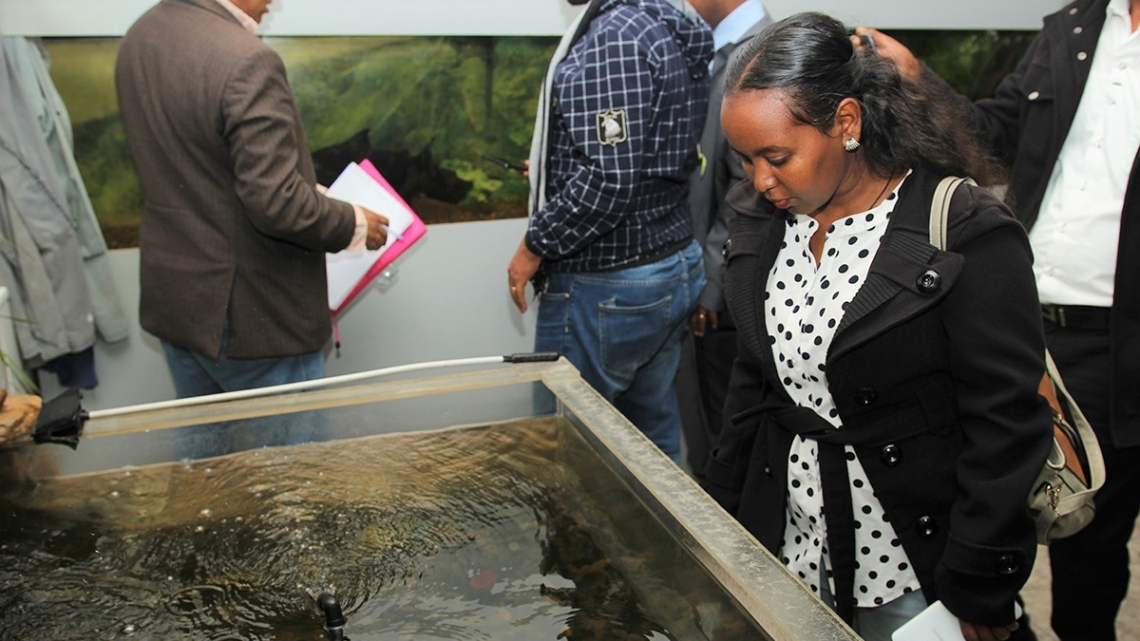 Russian fisheries and aquaculture knowledge shared with UNIDO-led delegation from Ethiopia
