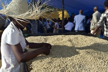Public and private sectors join forces to enhance the Ethiopian coffee value chain