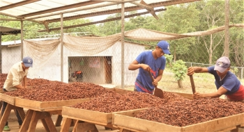 UNIDO and Switzerland expand cooperation to support cocoa value chain in Nicaragua's mining triangle
