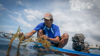 Impact of COVID-19 epidemic hits Indonesia's small seaweed processors
